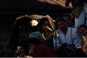 Aigle en vol fête médiévale Leignec 2019