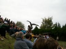 Aigle sur le public
